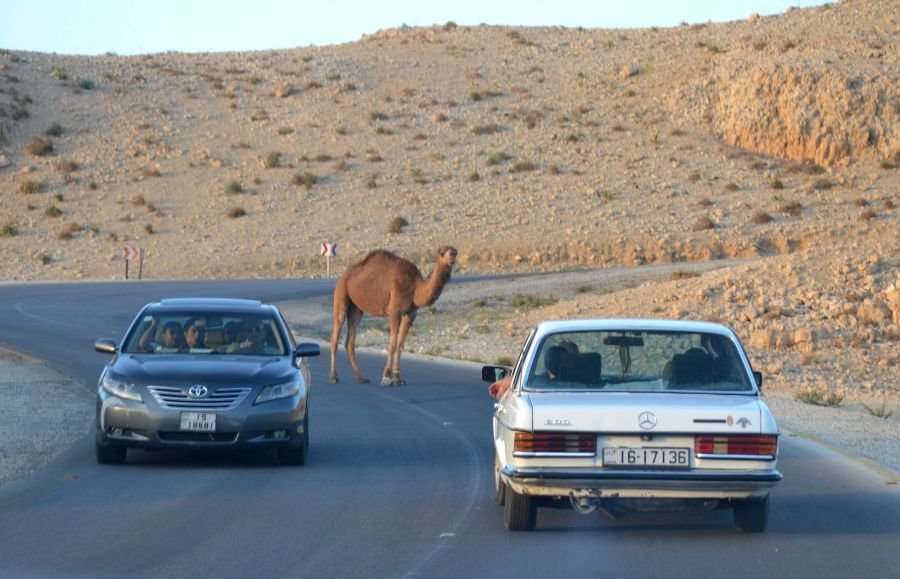 OUT OF MY WAY, CAMEL!!