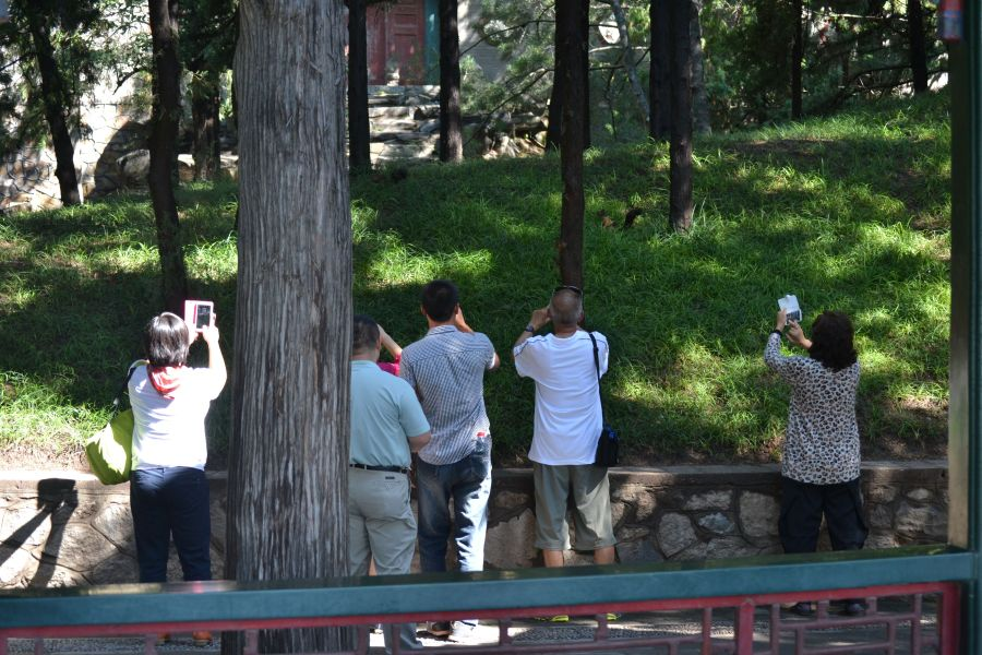 Western tourists taking pictures of Chinese tourists taking pictures of a squirrel. Welcome to age of digital photography.