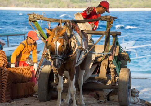 Because there are no cars, everything has to be brought in by horse carriage or hand. Photo courtesy of Chris Hale.