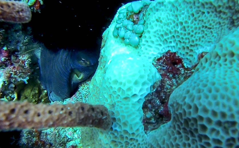 An octopus in the upper left, trying to have a nap